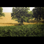 https://www.gerhard-richter.com/en/art/paintings/photo-paintings/landscapes-14/trees-in-a-field-7657?&categoryid=14&p=1&sp=32&tab=photos-tabs&painting-photo=1787#tabs